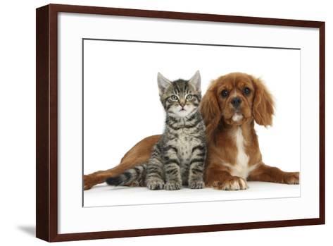 Tabby Kitten, Fosset, 8 Weeks Old, Sitting with Ruby Cavalier King Charles Spaniel Bitch, Star-Mark Taylor-Framed Art Print