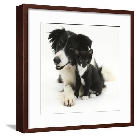 Black-And-White Border Collie Bitch, with Black-And-White Tuxedo Kitten, 10 Weeks-Mark Taylor-Framed Art Print