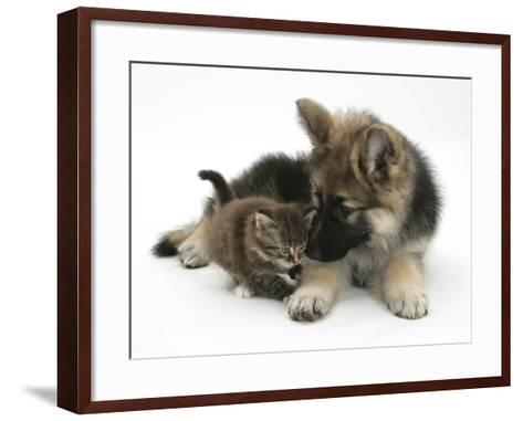 German Shepherd Dog Bitch Puppy, Echo, with a Tabby Kitten-Mark Taylor-Framed Art Print
