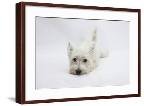 West Highland White Terrier Lying Stretched Out with Her Chin on the Floor-Mark Taylor-Framed Art Print