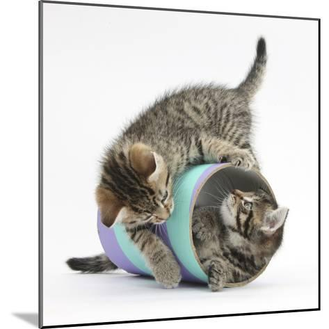 Two Cute Tabby Kittens, Stanley and Fosset, 7 Weeks, Playing with a Tube-Mark Taylor-Mounted Photographic Print