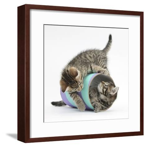 Two Cute Tabby Kittens, Stanley and Fosset, 7 Weeks, Playing with a Tube-Mark Taylor-Framed Art Print