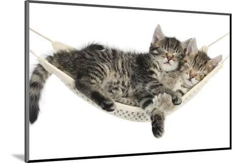 Two Cute Tabby Kittens, Stanley and Fosset, 7 Weeks, Sleeping in a Hammock-Mark Taylor-Mounted Photographic Print