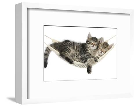 Two Cute Tabby Kittens, Stanley and Fosset, 7 Weeks, Sleeping in a Hammock-Mark Taylor-Framed Art Print