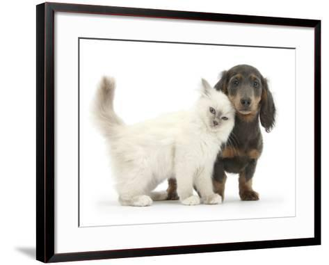 Blue-Point Kitten and Blue-And-Tan Dachshund Puppy, Baloo, 15 Weeks-Mark Taylor-Framed Art Print