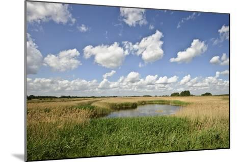 Reed Beds at Joist Fen, Lakenheath Fen Rspb Reserve, Suffolk, UK, May 2011-Terry Whittaker-Mounted Photographic Print