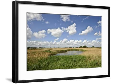 Reed Beds at Joist Fen, Lakenheath Fen Rspb Reserve, Suffolk, UK, May 2011-Terry Whittaker-Framed Art Print