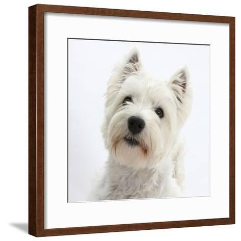 Portrait of a West Highland White Terrier-Mark Taylor-Framed Art Print