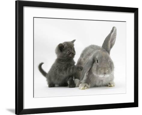 Grey Kitten with Grey Windmill-Eared Rabbit-Mark Taylor-Framed Art Print