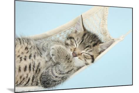 Cute Tabby Kitten, Stanley, 7 Weeks, Sleeping in a Hammock-Mark Taylor-Mounted Photographic Print