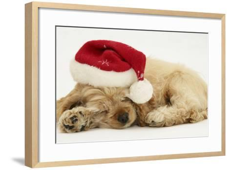 Buff American Cocker Spaniel Puppy, China, 10 Weeks Old, Asleep with Father Christmas Hat On-Mark Taylor-Framed Art Print
