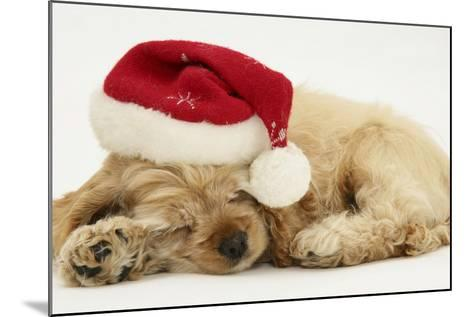 Buff American Cocker Spaniel Puppy, China, 10 Weeks Old, Asleep with Father Christmas Hat On-Mark Taylor-Mounted Photographic Print