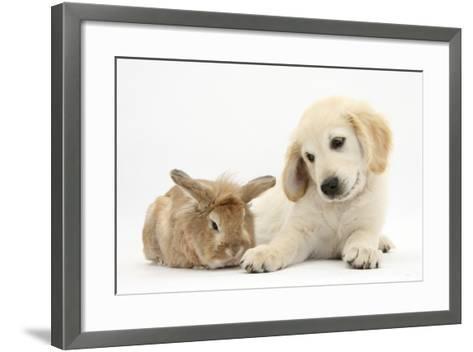 Lionhead Cross Rabbit, Tedson, and Golden Retriever Dog Puppy, Oscar, 3 Months-Mark Taylor-Framed Art Print