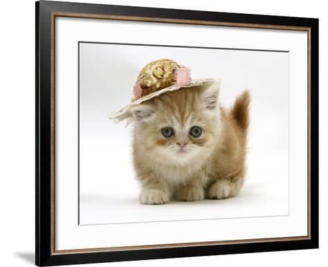 Ginger Kitten Wearing a Straw Hat-Mark Taylor-Framed Art Print