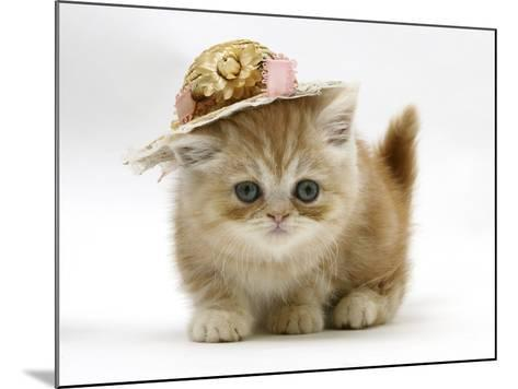 Ginger Kitten Wearing a Straw Hat-Mark Taylor-Mounted Photographic Print
