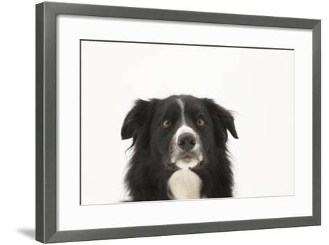 Border Collie Face Portrait-Mark Taylor-Framed Art Print