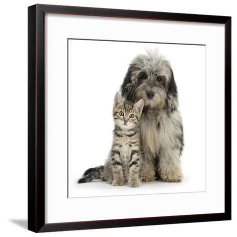 Tabby Kitten 8 Weeks, with Fluffy Black and Grey Daxie Doodle (Daschund Poodle Cross) Puppy-Mark Taylor-Framed Art Print