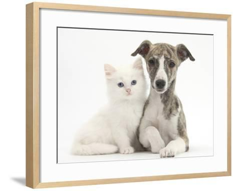 Brindle-And-White Whippet Puppy, 9 Weeks, with White Maine Coon-Cross Kitten-Mark Taylor-Framed Art Print