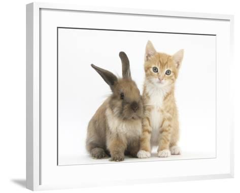Ginger Kitten, 7 Weeks, and Young Lionhead-Lop Rabbit-Mark Taylor-Framed Art Print