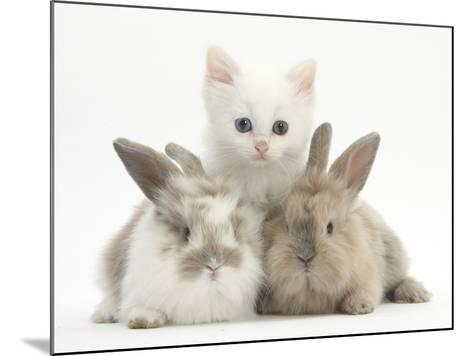 White Kitten and Baby Rabbits-Mark Taylor-Mounted Photographic Print