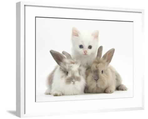 White Kitten and Baby Rabbits-Mark Taylor-Framed Art Print
