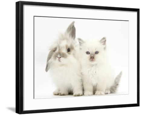 Young Windmill-Eared Rabbit and Matching Kitten-Mark Taylor-Framed Art Print