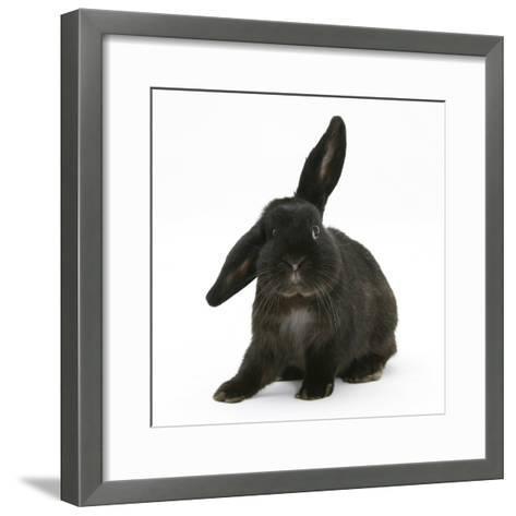 Black Rabbit with Windmill Ears-Mark Taylor-Framed Art Print