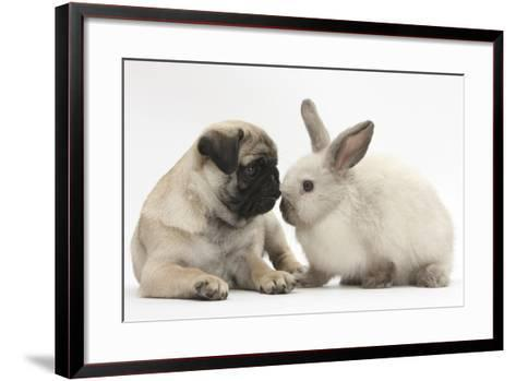 Fawn Pug Puppy, 8 Weeks, and Sooty Colourpoint Rabbit-Mark Taylor-Framed Art Print
