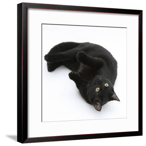 Black Male Cat, Joey, 6 Months, Rollling on Back-Mark Taylor-Framed Art Print