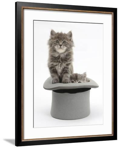 Two Maine Coon Kittens, 7 Weeks, in a Grey Top Hat-Mark Taylor-Framed Art Print