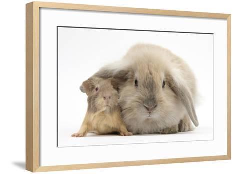 Young Windmill-Eared Rabbit and Matching Guinea-Pig-Mark Taylor-Framed Art Print