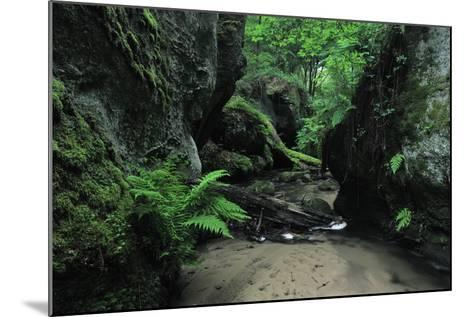 Halerbach - Haupeschbach Flowing Between Moss Covered Rocks with Ferns (Dryopteris Sp.) Luxembourg- Tønning-Mounted Photographic Print