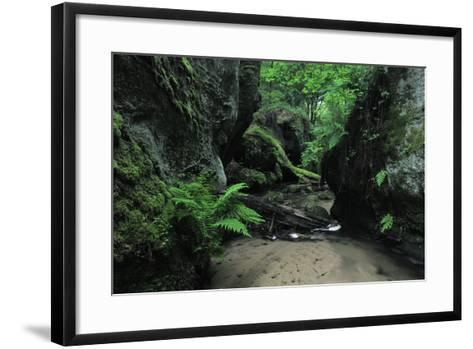Halerbach - Haupeschbach Flowing Between Moss Covered Rocks with Ferns (Dryopteris Sp.) Luxembourg- Tønning-Framed Art Print