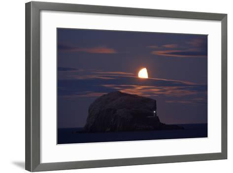 Northern Gannet (Morus Bassanus) Colony, Bass Rock with the Moon Rising, Firth of Forth, Scotland- Green-Framed Art Print