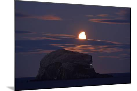 Northern Gannet (Morus Bassanus) Colony, Bass Rock with the Moon Rising, Firth of Forth, Scotland- Green-Mounted Photographic Print