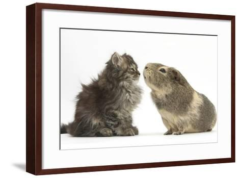 Tabby Kitten, 10 Weeks, with Guinea Pig-Mark Taylor-Framed Art Print