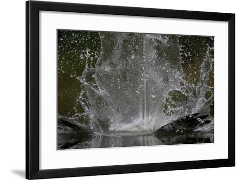 Splash in Water Made by Osprey (Pandion Haliaetus) Fishing, Kangasala, Finland, August 2009-Cairns-Framed Art Print