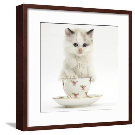 Colourpoint Kitten in a Tea Cup-Mark Taylor-Framed Art Print