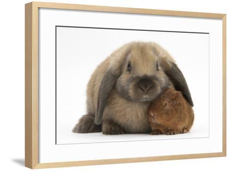 Baby Guinea Pig and Rabbit-Mark Taylor-Framed Art Print