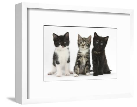 Portraits of Three Kittens-Mark Taylor-Framed Art Print