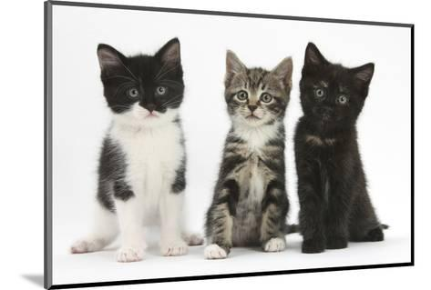 Portraits of Three Kittens-Mark Taylor-Mounted Photographic Print