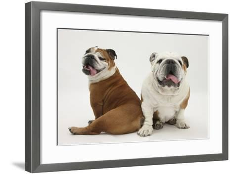 Two Bulldogs, Back to Back-Mark Taylor-Framed Art Print