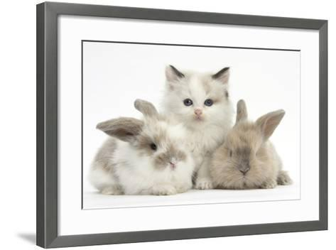 Colourpoint Kitten with Two Baby Rabbits-Mark Taylor-Framed Art Print