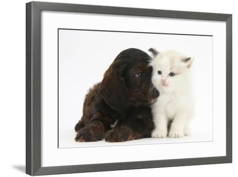 Cockerpoo Puppy and Ragdoll-Cross Kitten-Mark Taylor-Framed Art Print