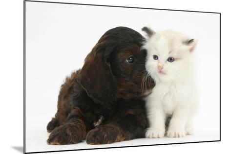Cockerpoo Puppy and Ragdoll-Cross Kitten-Mark Taylor-Mounted Photographic Print