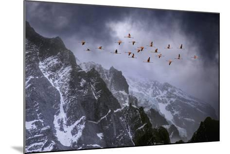 Chilean Flamingos (Phoenicopterus Chilensis) in Flight over Mountain Peaks, Chile-Ben Hall-Mounted Photographic Print
