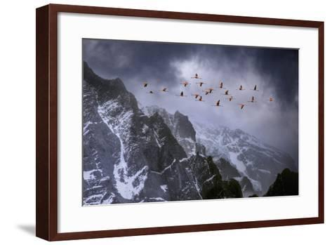 Chilean Flamingos (Phoenicopterus Chilensis) in Flight over Mountain Peaks, Chile-Ben Hall-Framed Art Print