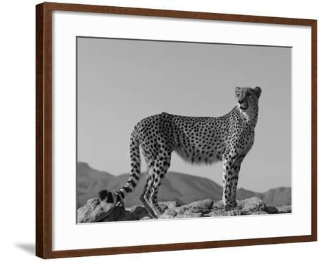 Portrait of Standing Cheetah, Tsaobis Leopard Park, Namibia-Tony Heald-Framed Art Print