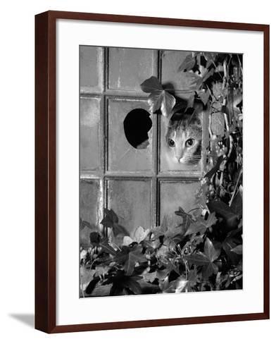 Tabby Tortoiseshell in an Ivy-Grown Window of a Deserted Victorian House-Jane Burton-Framed Art Print