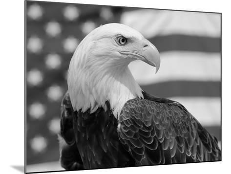 American Bald Eagle Portrait Against USA Flag-Lynn M^ Stone-Mounted Photographic Print